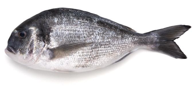 Queridos monstruos: los peces más feos del mercado — Sobremesa ...